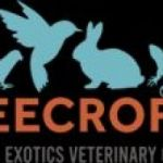 Bird and Exotics pet, Mammals veterinary specialist Clinic Singapore
