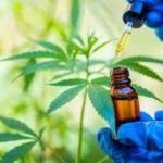 Click Here @ https://www.homify.in/projects/999437/gold-bee-cbd-oil-products-for-sale-netherlands